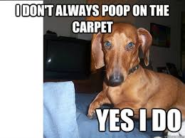 Dachshund Meme - most interesting dachshund in the world memes quickmeme
