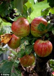 fruit by mail appetite for home grown apples on the increase with sales of fruit