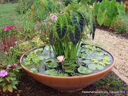 Rock Garden Planters by Varietated Elephant Ears Paired With Lotus For A Dramatic Garden