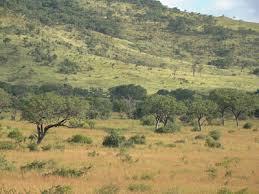 Tropical Savanna Dominant Plants - savanna vegetation predictions best done by continent