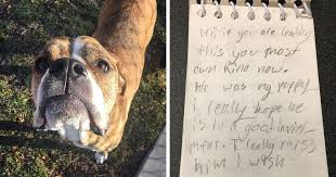 boxer dog utah this dog was returned to shelter but it had this letter bored panda