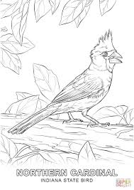 indiana state bird coloring page free printable coloring pages