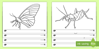 zealand bugs insects colouring pages zealand
