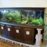 Office Desk Aquarium Office Desk Aquarium House Beautifull Living Rooms Ideas Including