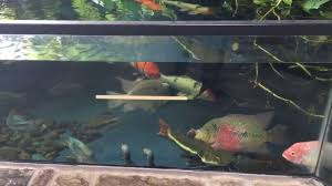 indoor fish pond from tropiquarium youtube