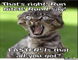Run Bitch Run Meme - run bitch run by dragoongt meme center