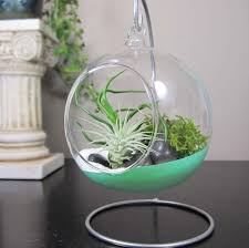decorating beautiful glass globe hanging terrarium with air