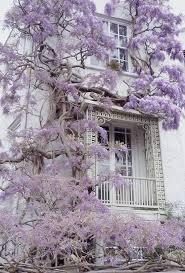72 best growing wisteria images on pinterest garden ideas