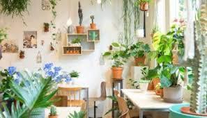 indoor plant display 30 awesome indoor plant display modernhousemagz