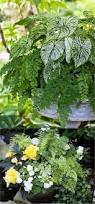 Shade Garden Vegetables by 761 Best Images About Garden On Pinterest