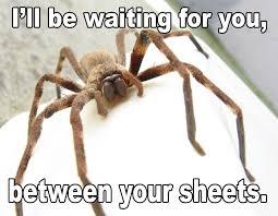 Make It Rain Meme - hey guys can we make it rain spiders i should 143823586 added by