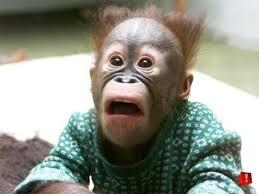 surprised monkey face meme generator