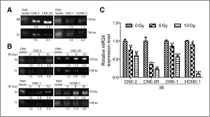 involvement of microrna 24 and dna methylation in resistance of