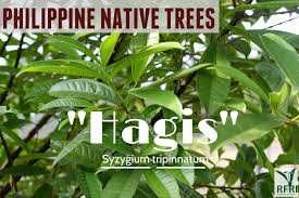 the return of philippine native trees u2013 both public and private