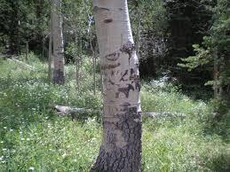 tree symbolism historic sites and shipwrecks