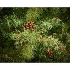 foxboro pine artificial tree walnut ridge nursery and