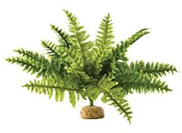 amazon com exo terra boston fern terrarium plant medium pet