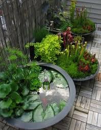 Indoor Garden Containers - creative indoor gardening plants rock water arrangement low