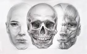 face drawing tutorial by hel999 on deviantart