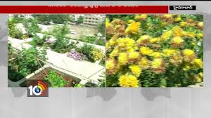 Types Of Community Gardens - amazing terrace garden in nallakunta different types of plants