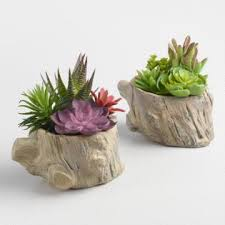 faux succulents with rocks set of 2 world market
