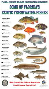 Freshwater Fish 861 Best Tropical Fish Fresh Water Images On Pinterest Tropical