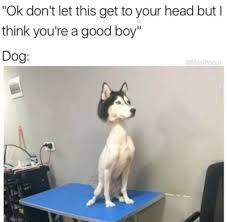 Memes Dog - 20 hilarious dog memes