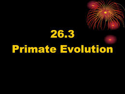 ch 26 animal evolution and diversity ppt video online download