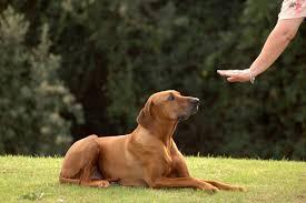 how to train dog to stop barking anxiety u0026 phobias canna pet