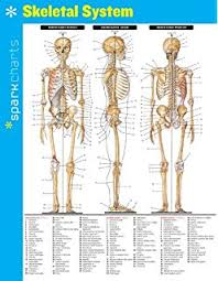 general anatomy sparkcharts 9781411470187 medicine u0026 health