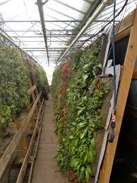 Home Decor Europe Wallclo Green Walls E2 80 93 Greenwalls Interior Indoor Loversiq