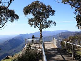blue mountains native plants nature and wildlife