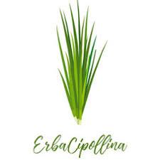 erba cipollina in vaso breve guida alle erbe aromatiche si possono coltivare in