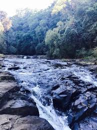 Gardeners Falls Maleny - gardners falls maleny australia top tips before you go with
