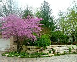Small Front Garden Design Ideas Small Front Garden Design Houzz