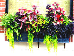container garden plans home outdoor decoration