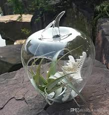large apple succulent terrarium air plant terrarium indoor plant