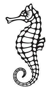 drawn seahorse easy pencil and in color drawn seahorse easy