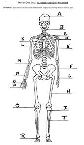 skeletal worksheet free worksheets library download and print