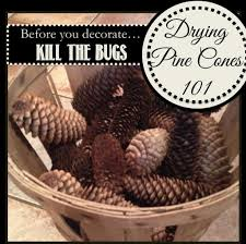 two it yourself pinecone decor how to clean and dry pine cones