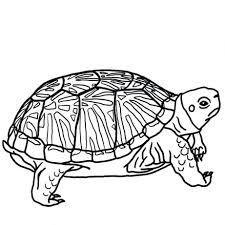 teenage mutant ninja turtles coloring pages free printable turtle