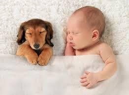 q u0026a can i have a dog around a newborn
