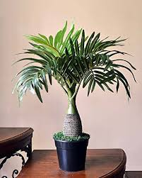 buy ginni bloom artificial bonsai palm tree at low prices in