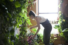 Plants That Don T Need Natural Light by Meet A Woman Who Keeps 500 Plants In Her Brooklyn Apartment