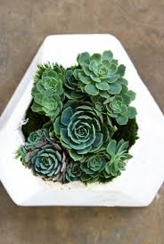 how to maintain your succulent wall planter u2014 rolling greens
