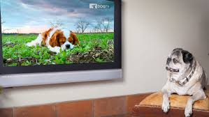dogtv for dogs
