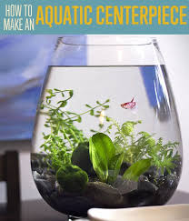 Unique Table Centerpieces For Home by Aquatic Table Centerpiece Project Small Fish Tanks Unique