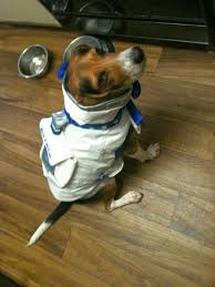 party city halloween costumes coupons 2013 life with beagle need a halloween costume for your pet check out