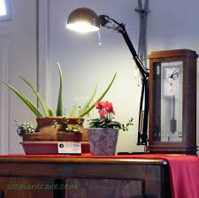 all about light for your houseplants archives sosplantcare com