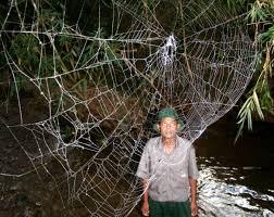 tropical rainforest biggest spiders halloween roundup